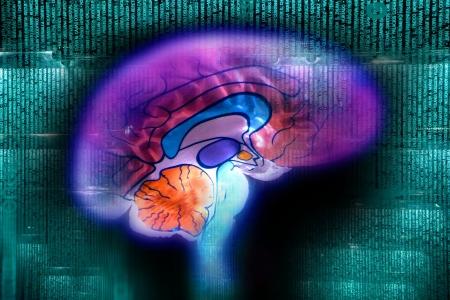 brain Stock Photo - 7607879