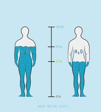 Infographie silhouette montrant le pourcentage d'eau dans l'illustration vectorielle du corps humain