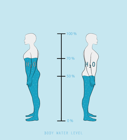 woman silhouette infographic showing water percentage level in human body vector illustration