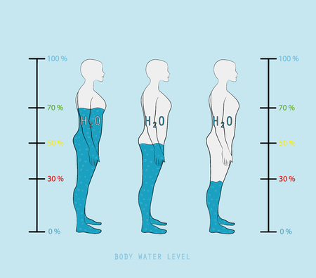 woman silhouette infographic showing water percentage level in human body vector illustration Vektorové ilustrace