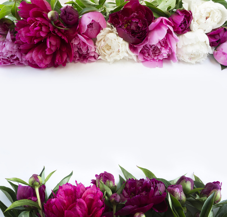 Peonies on a white background. Peonies at border of image with copy space for text. Top view.