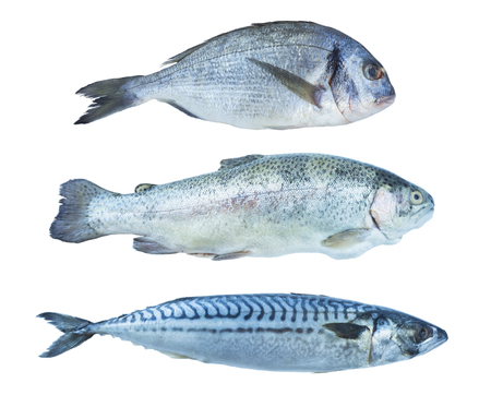 Fish rainbow trout, dorado, mackerel, isolated on a white background. Set of marine fish. Marine fish over white background. Fishes with copy space for text.