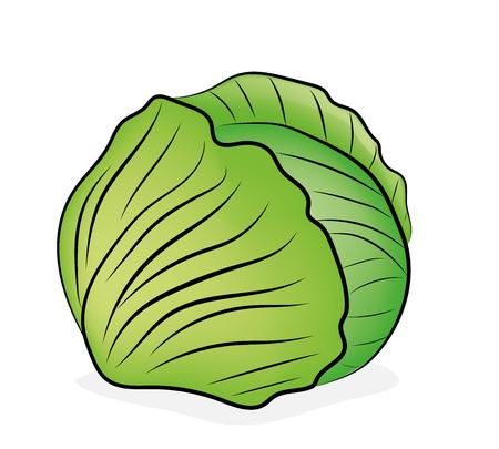 cabbage. vector illustration. Çizim