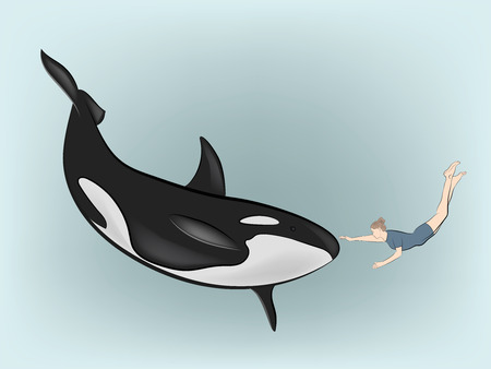 woman under the water touches the killer whale. vector illustration.