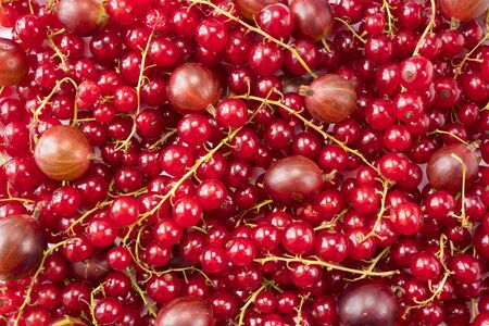 Background of red currants and red gooseberries. Fresh berries closeup. Top view. Background of fresh berries. Various fresh summer fruits. Red food.