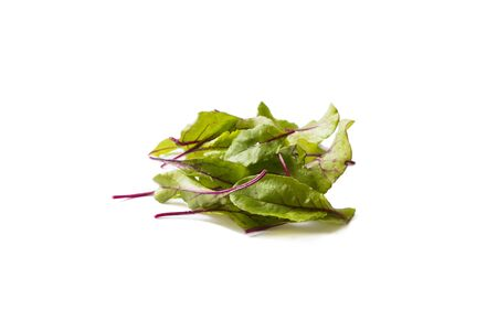 Sweet beet leafs(mangold) isolated on white background. Top view. Leaves of baby chard  on white. Sweet beet leafs with copy space for text. Mangold isolated on white background.