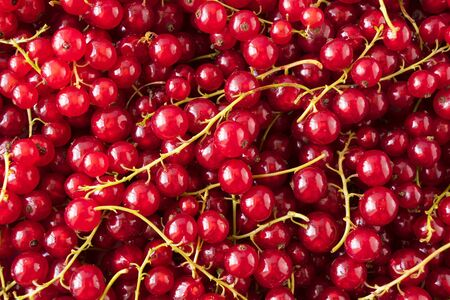 Background of red currants. Fresh berries closeup. Top view. Background of fresh berries. Various fresh summer fruit. Red food. Immunity system improvement. Antiviral treatment. Coronavirus prevention