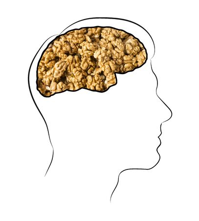 Food for brain, the human brain from the walnuts. Walnuts in the brain. Human silhouette with shelled walnuts on white background. walnuts in shape of human brain. Walnut resembling brain.Illustration