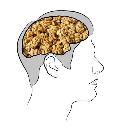 Food for brain, the human brain from the walnuts. Walnuts in the ead. Human silhouette with shelled walnuts on white background. walnuts in shape of human brain. Walnut resembling brain. Illustration. Imagens