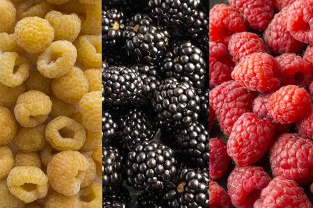 Background of blackberry, yellow and red raspberry. Fresh berries closeup. Top view. Background of fresh berries red, yellow and black color. Immunity system improvement. Coronavirus prevention.