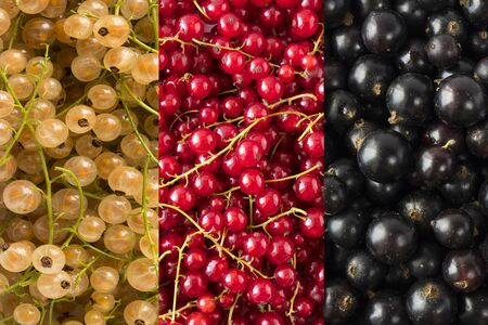 Background of blackcurrants, yellow and red currants. Top view. Background of fresh berries red, yellow and black color.Immunity system improvement. Antiviral treatment. Coronavirus prevention.