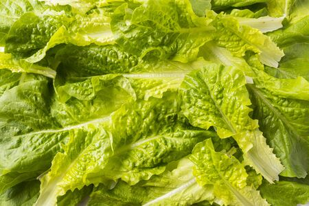 Top view. lettuce leaves. Background of lettuce leaves. Fresh leaves background. Texture lettuce close up.