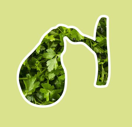 Human gallbladder in parsley. Fresh parsley in the shape of a gallbladder. Silhouette of gallbladder. Fresh herbs are useful for the gall bladder. 