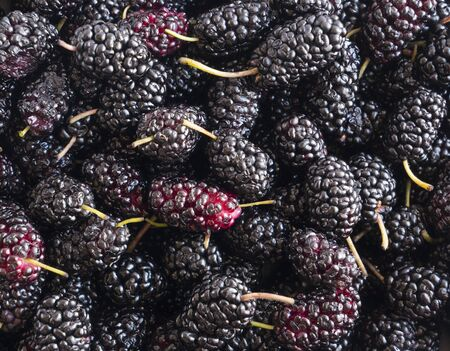 Fresh mulberries background. Texture mulberries close up. Background of black berries. Various fresh summer fruits. Background of mulberries. Antiviral treatment. Coronavirus prevention. Top view. Imagens