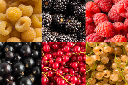 Fresh blackberry and currants background. Background of blackcurrants, yellow, red currants and blackberry, raspberies. Ripe berry background. Berries in red, yellow and black. Top view. Stok Fotoğraf