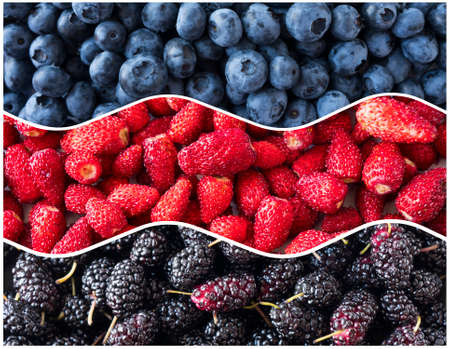 Berries for infographics. Fresh berries closeup. Blueberries, strawberries and mulberries in the shape of a circle. Berries for infographics. Fresh berries closeup. Top view. Antiviral treatment.