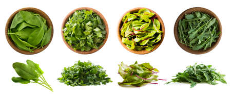Leafy vegetables isolated on white. Spinach leaves, parsley, swiss chard (mangold or beet leafs), arugula. Vegetables with copy space for text. Top view. Studio photo. Fresh leafy vegetables isolate. Imagens