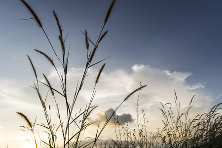 flowers grass with sky sunset background in winter Stock Photo