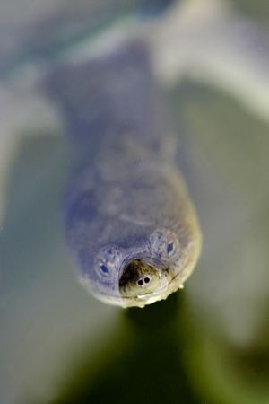 necked: Lang Ongedierte Turtle Stockfoto