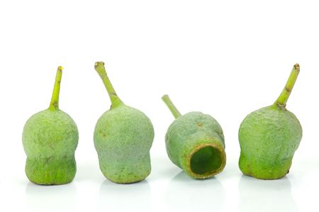 Eucalyptus gum nuts isolated against a white background