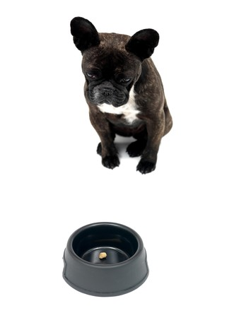 wrinkely: A French Bulldog in front of a dog bowl isolated against a white background