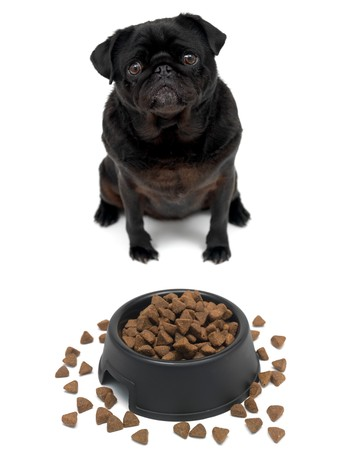 wrinkely: A black Pug and a dog bowl isolated against a white background
