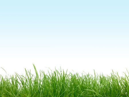 turf: Green grass isolated against a blue sky