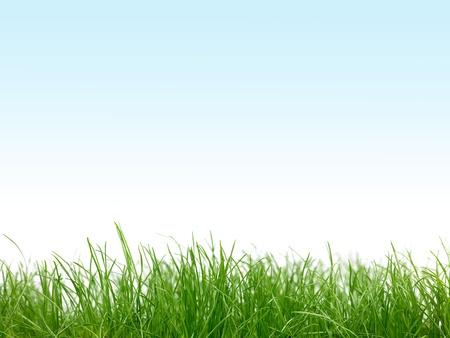 football grass: Green grass isolated against a blue sky