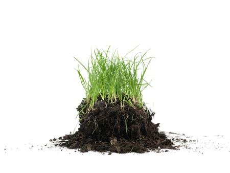 녹색 잔디는 흰색 배경에 대해 격리