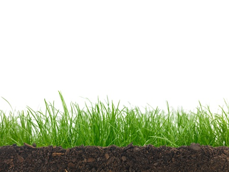 high angles: Green grass siolated against a white background