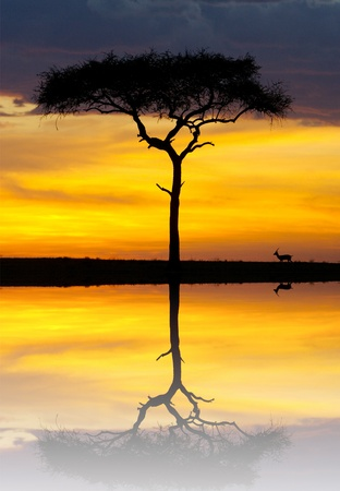 African safari sunset with an Impala grazing Stock Photo - 9505958