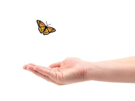 Eine weibliche Hand mit Schmetterlingen vor einem weißen Hintergrund isoliert