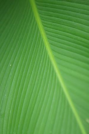 An image of troptical vegetation up close photo