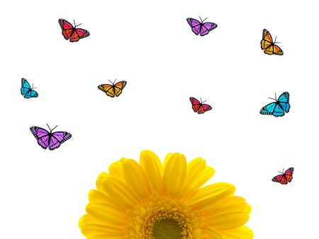 Colored butterflies isolated against a white background photo