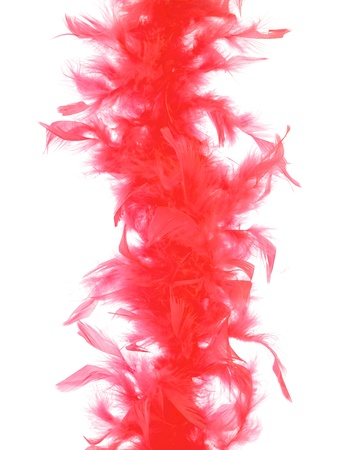 Boa feathers isolated against a white background