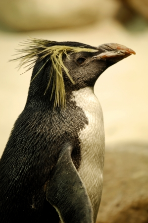 Photos of Fairy Penguins taken in captivity
