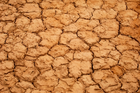 aridness: A dry water hole showing cracked mud
