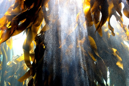 Close up shots of maine life in an aquarium photo