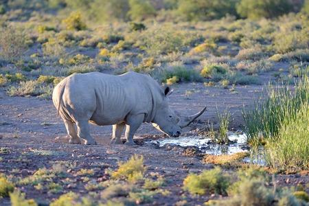 A shot of rhinos in captivity photo