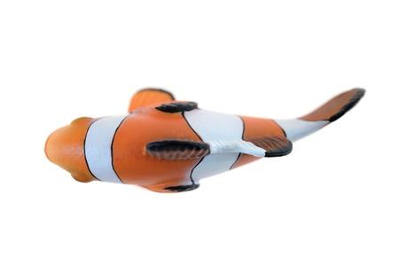 false percula clownfish: A close up shot of a Clown Fish