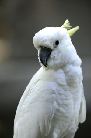 A close up shot of a white Parrot photo