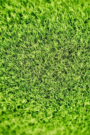 pasto sintetico: Un estudio de la foto de la hierba sintética