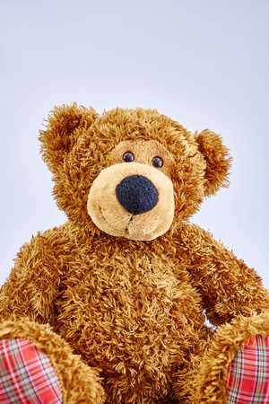 A studio photo of a toy bear Stockfoto