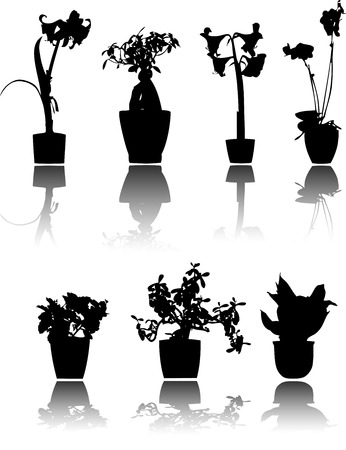7 beautiful house plants silhouettes, reflected Vector