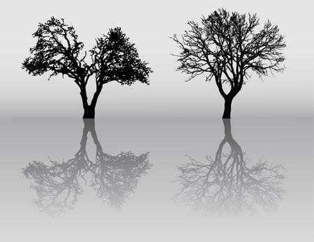 Deux belles hiver arbre silhouettes, très détaillées.  Banque d'images - 9823863