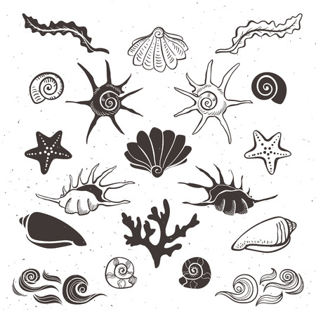 Vintage sea shells, starfish, seaweed, coral and waves. Hand drawn decorative elements on white background. Illustration