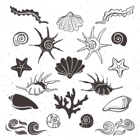 Vintage morskie muszle, rozgwiazdy, wodorosty, koralowe i fale. Ręcznie rysowane elementy dekoracyjne na białym tle.