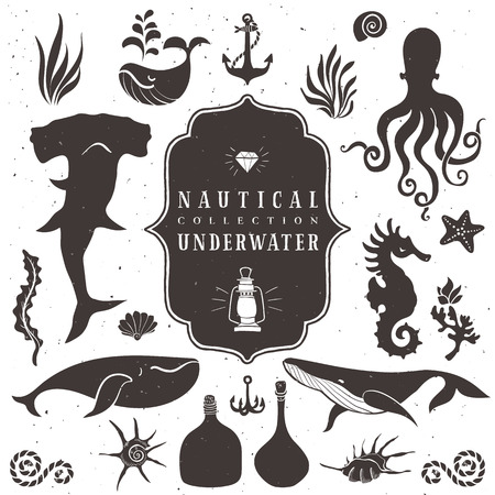 Sea life, marine animals. Vintage hand drawn elements in nautical style. Vector