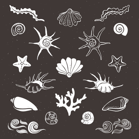 Vintage sea shells, starfish, seaweed, coral and waves. Hand drawn decorative elements on dark background. Illustration