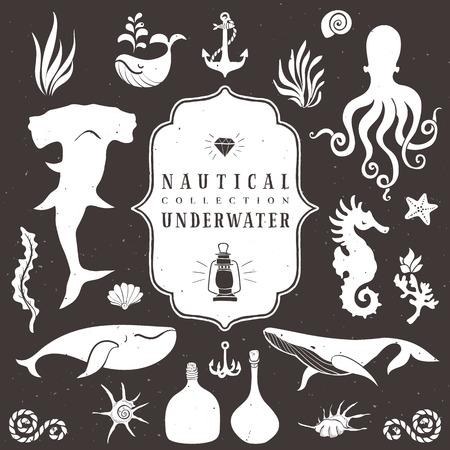 Sea life, marine animals. Vintage hand drawn elements in nautical style.